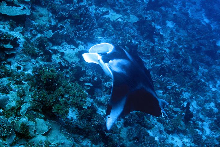 В гостях. Подводные учебные фотосессии. Новая Каледония - Туамоту