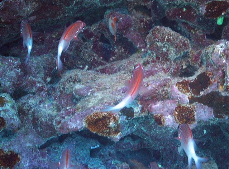Новая Каледония (залив Noumea). Грот. Сияние a
