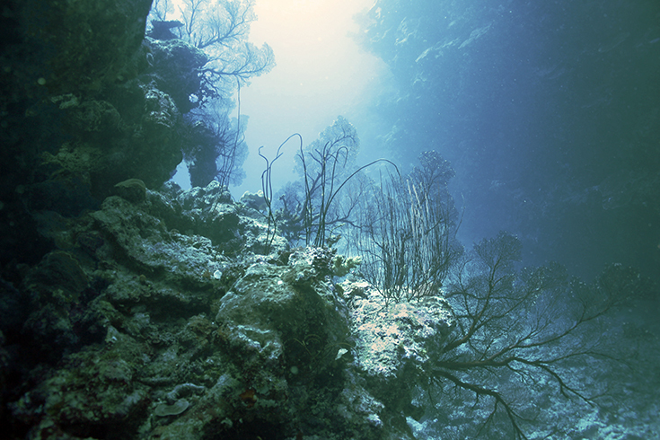 Новая Каледония, залив Poindimie, сайт Barjibanti, ландшафт с горгониями I, июль 2014