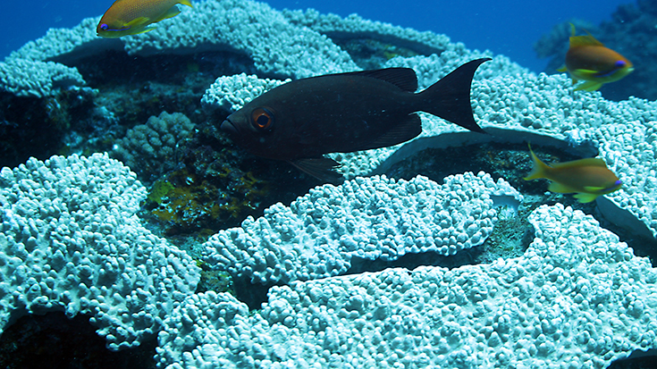Подводная съемка острова Реюньон, Индийский океан
