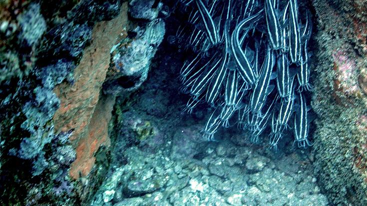 Подводная фотосъемка. Остров Реюньон, январь 2015