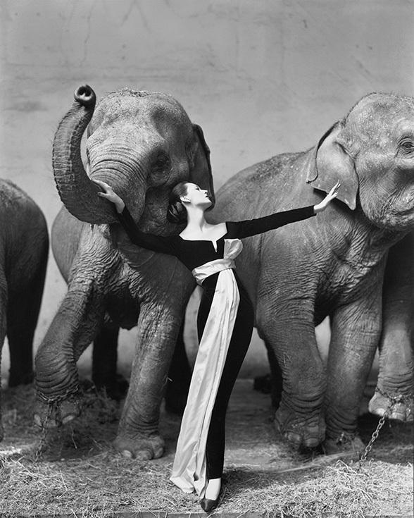 Ричард Аведон. Довима со слонами. Съемка для Dior, Париж, 1955