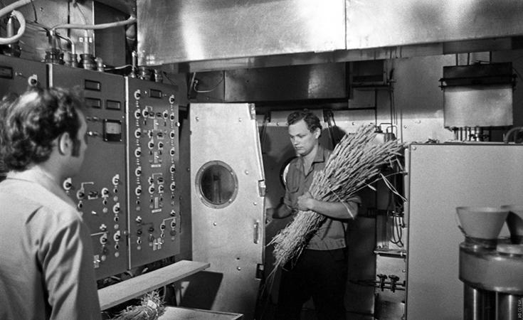 Петров Н.И. (справа) и Терских В.В. в установке «БИОС-3» с собранным урожаем пшеницы. Готовят обмолот в специально сконструированной для этого эксперимента мельнице, фото 1973 года.