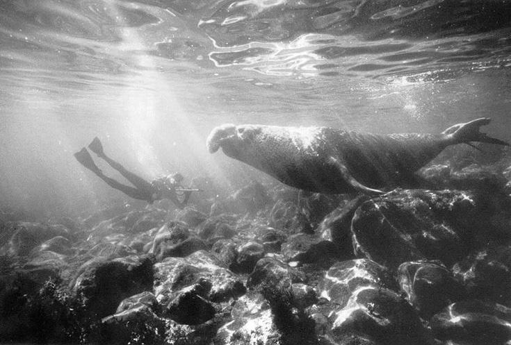 Ив Омер и морской слон